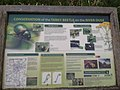 Conservation of the Tansy Beetle on the River Ouse. - panoramio.jpg