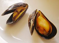 Cooked mussels can be orange, or of a pale yellow.