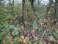 Coombe Wood, Yorkletts - geograph.org.uk - 617137.jpg