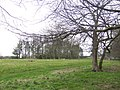 Copse near Blyborough Grange - geograph.org.uk - 326781.jpg