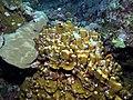 Coral (6159020578).jpg