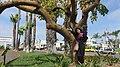 Coronado, CA, USA - panoramio (54).jpg