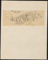 Coryphaena lutea - 1700-1880 - Print - Iconographia Zoologica - Special Collections University of Amsterdam - UBA01 IZ13500320.tif