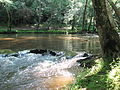 Crabtree Creek Company Mill Trail Umstead NC SP 0082 (3583030539).jpg