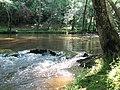 Crabtree Creek Company Mill Trail Umstead NC SP 0082 (3583030539).jpg