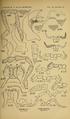Craspedosomatidae of North America 1895 Plate VI.png