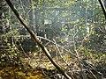 Creek and campfire - panoramio.jpg