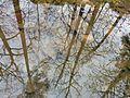 Creek reflection at Fallon Park in Raleigh, North Carolina.jpg