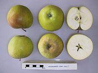 Cross section of Abondance, National Fruit Collection (acc. 1947-260).jpg