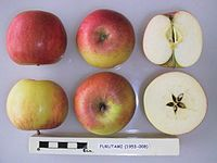Cross section of Fukutami, National Fruit Collection (acc. 1953-008).jpg