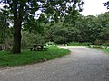 Crynant Forestry Walk, Picnic Site - geograph.org.uk - 975968.jpg