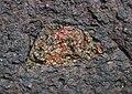 Crystals in lava - Flickr - S. Rae.jpg