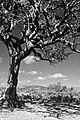 Dartmoor 0810 3593bwa (5064721363).jpg