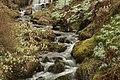 Dawyck Botanic Garden (3758815156).jpg