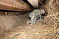 Defense.gov News Photo 080208-A-0755C-049.jpg