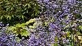 Denmark - Copenhaguen, Botanisk Haves - panoramio (5).jpg