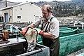 Depositing the fish (15889829184).jpg