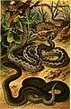 Deutschlands Amphibien und Reptilien. Eine Beschreibung und Schilderung sämmtlicher in Deutschland und den angrenzenden Gebietan vrokommenden Lurche und Kreichthiere (1897) (20878878312).jpg