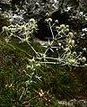 Devinska kobyla forest 06.jpg