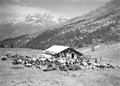 Die Truppe erholt sich in der Sonne vor der Alphütte - CH-BAR - 3239884.tif