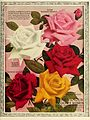 Dingee guide to rose culture (16891975549).jpg
