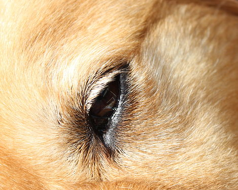 Dog's eye closeup.JPG