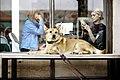 Dog waiting by a coffee shop (Unsplash).jpg