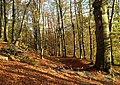 Doline in Steilstufe des Muschelkalks zwischen Bad Berka und Saalborn 07.jpg