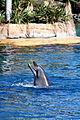 Dolphin Cove 49.jpg