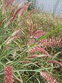 Dragon Fly Grass.jpg