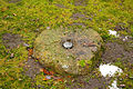 Dubenuotas akmuo Kleboniskese.jpg
