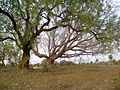Dugariya, Madhya Pradesh 471101, India - panoramio (6).jpg