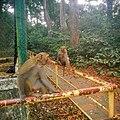 Dulhazra Safari Park, Bangladesh.jpg