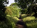 Early Morning on the Hull to Withernsea Trackbed - geograph.org.uk - 843749.jpg