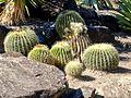 Echinocactus (5155639441).jpg