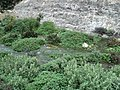 Ed Dabbousiya waterfalls05.JPG
