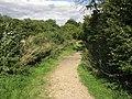 Edlington Wood - geograph.org.uk - 238915.jpg
