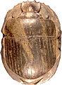 Egyptian - Scarab Amulet - Walters 1984305 - Back.jpg