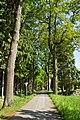 Eichenalle in Schrems Richtung Norden 2014-05 NÖ-Naturdenkmal GD-129.jpg