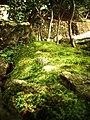 Eigen-ji (Rinzai temple) landscape.jpg