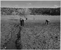 El Cerrito, San Miguel County, New Mexico. The staple crops in El Cerrito are corn, beans and alfal . . . - NARA - 521201.tif