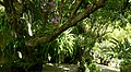 El Salvador - San Salvador, Latin Top Jobs Garden - panoramio (30).jpg