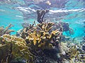 Elch Korallen (36530989352).jpg