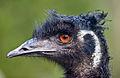 Emu portrait - Jun 05.jpg