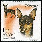 English-Toy-Terrier-Canis-lupus-familiaris.jpg