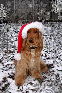 Photograph of a brown English Cocker Spaniel sitting and wearing a red-and-white Santa cap in a snow-themed set