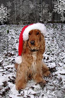 Christmas Card Wikipedia