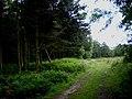 Entering Gardam Moor - geograph.org.uk - 1371976.jpg