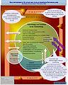 Entwicklung-27-06-10-vereinf.jpg