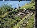 Erpel bei Erpel - panoramio.jpg